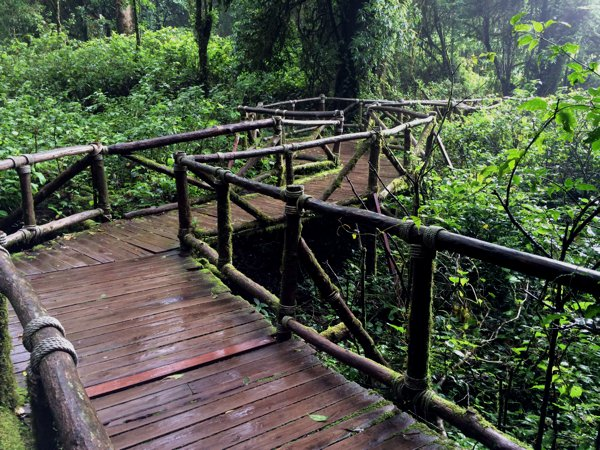 An easy trek at Doi Inthanon. From the looks of the moss-coated wooden rails, this place must be wet most of the time.