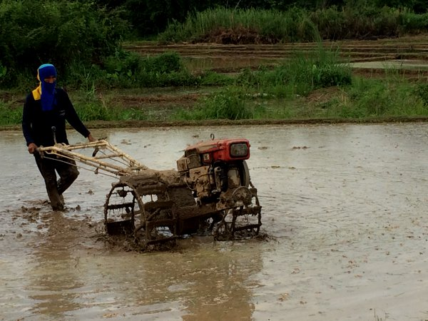 A farmer tilling the pady field at Sutongpe.