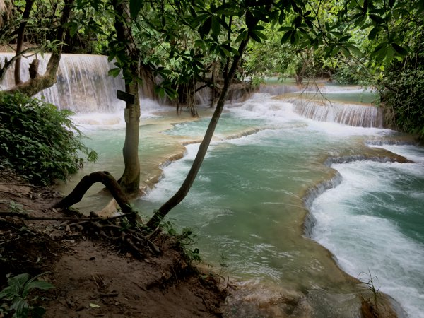 The waters in Tat Kuang Si appear emerald in color due to the high calcium carbonate content.
