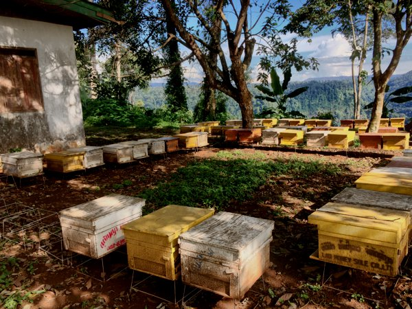 Buzzz.... One part of his Lao Honey - Daryl's bee farm, set against an awesome mountain-view backdrop. They are at 15°10′24″ N 106°5′47″ E if you'd like to visit.