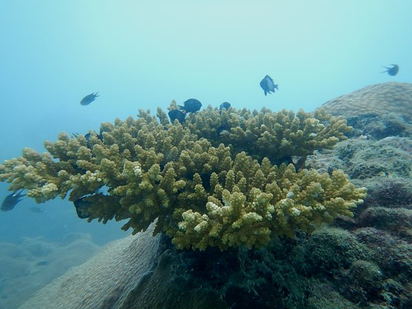Corals. Didn't find Nemo hiding there though.