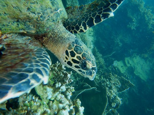 Another dive group, not ours, spotted this sea turtle.